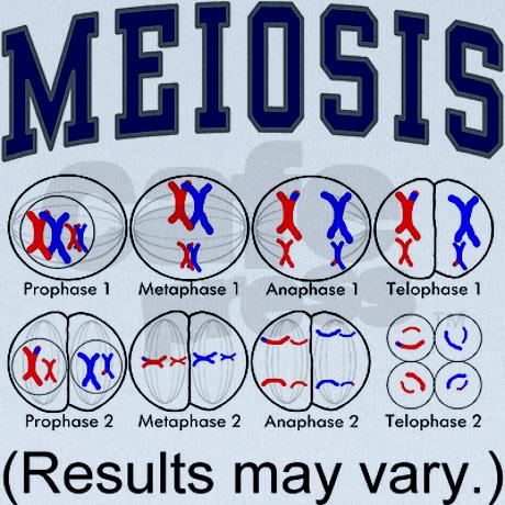 Mitosis or Meiosis? - The Meta Picture